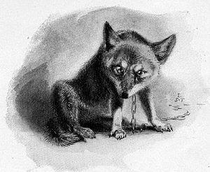 волк эскиз (1)