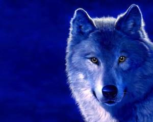 волк эскиз (19)