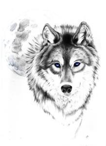 волк эскиз (16)
