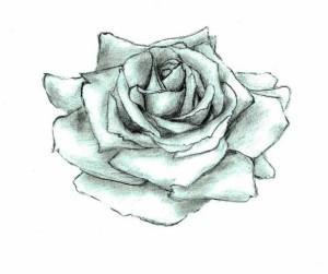 тату розы эскиз (13)