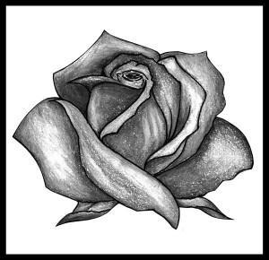 тату розы эскиз (3)
