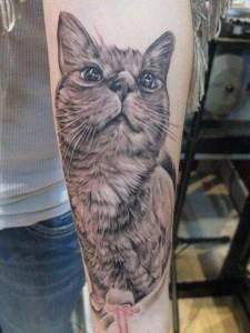 кошка на руке (4)