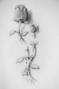 тату розы эскиз (14)