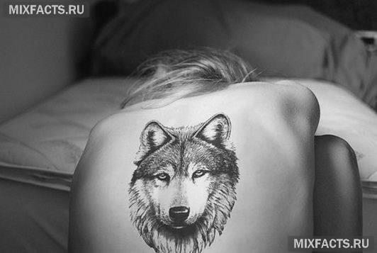 женская тату волка на спине