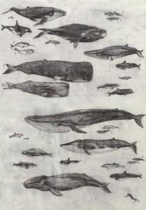 тату эскизы кита (2)