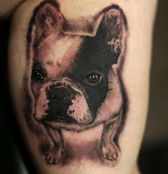 Собака породы французский бульдог