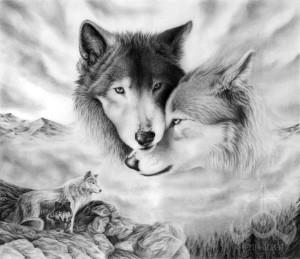 волк эскиз (20)