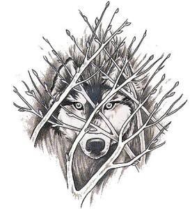 волк эскиз (11)
