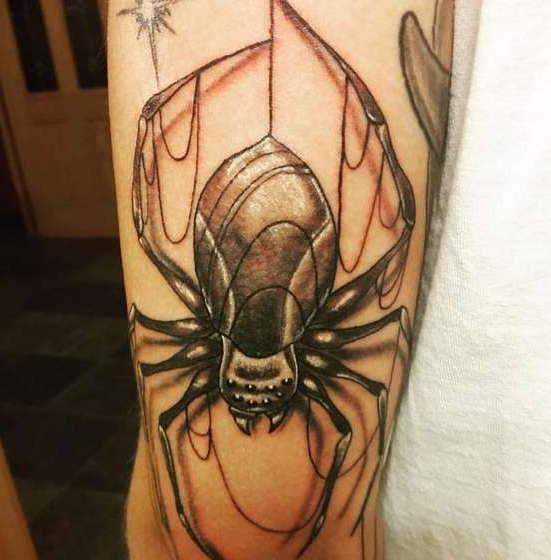 Паук тарантул на лопатке