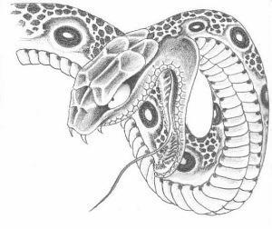 змея эскизы (5)