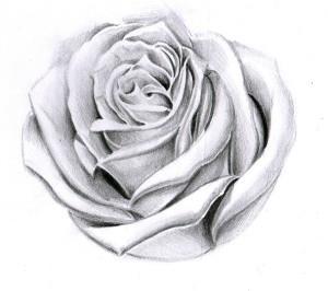 тату розы эскиз (9)