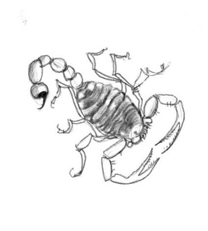 как рисовать скорпиона карандашом