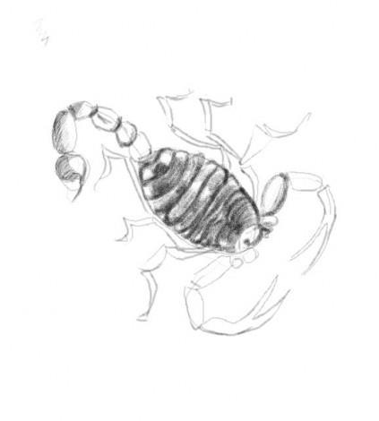 нарисовать скорпиона