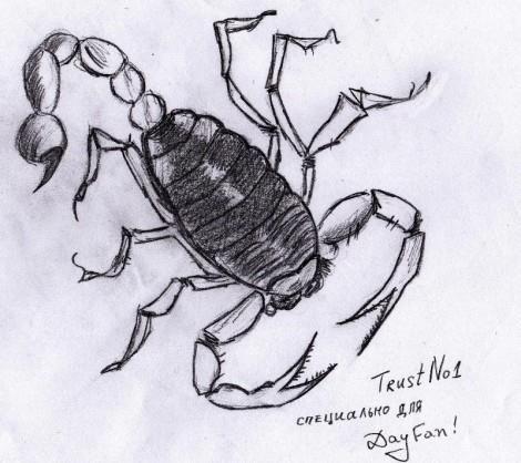 как нарисовать скорпиона поэтапно