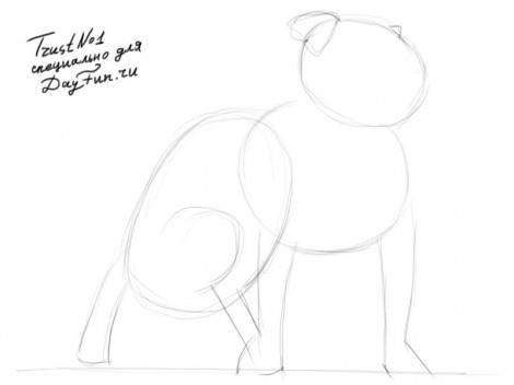 Как нарисовать питбуля карандашом поэтапно 1