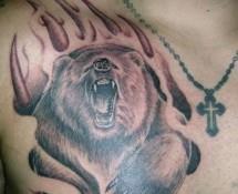 медведь на груди