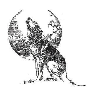 волк эскиз (12)